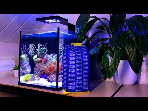 Nano Reef Tank Fish No Skimmer Youtube In 2020 Nano Reef Tank Reef Tank Reef