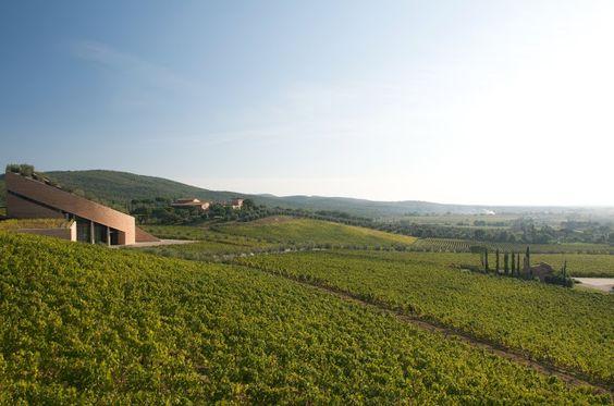 Petra Winery, vineyards and wine cellar by Mario Botta