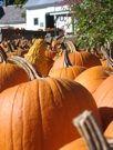 Riverview Pumpkins