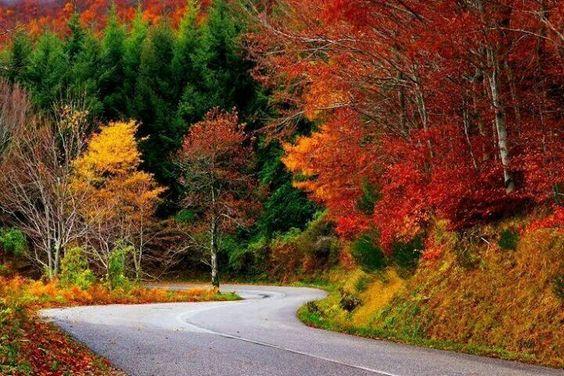 Carretera al otoño.