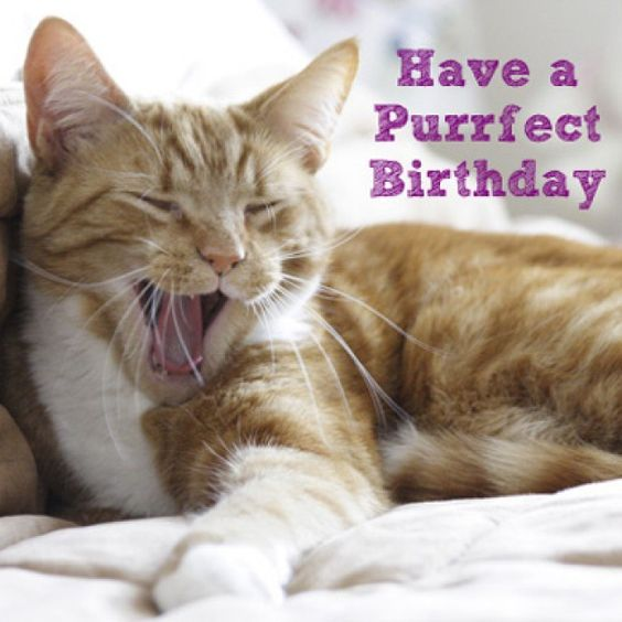 Have a Purrfect Birthday Cat Card: