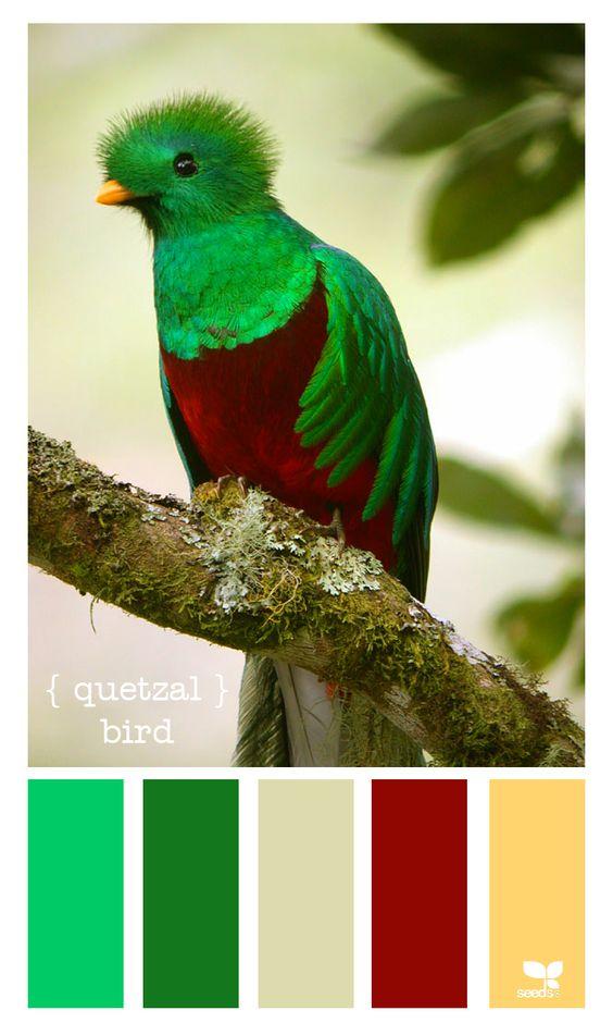 Quetzal A Bird Of Guatemala Design Seeds Color Palette Seeds Color Palette Seeds Color