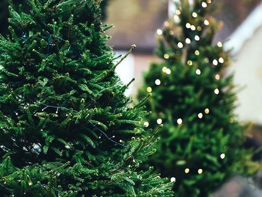 Christmas Trees Near Me Gallery Di 2020