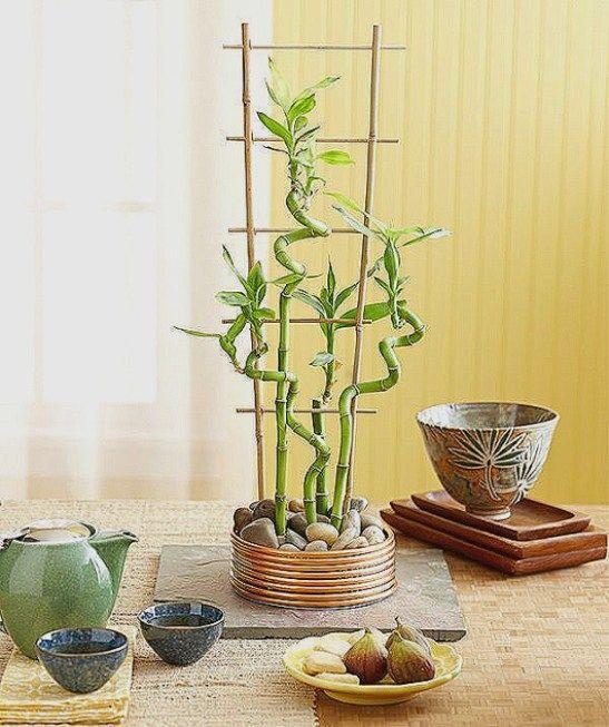 Bamboo Plant Decoration Ideas Beautiful Bamboo House Plant