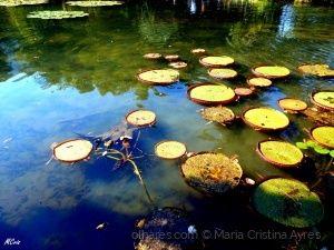 Espelho da natureza... MCris