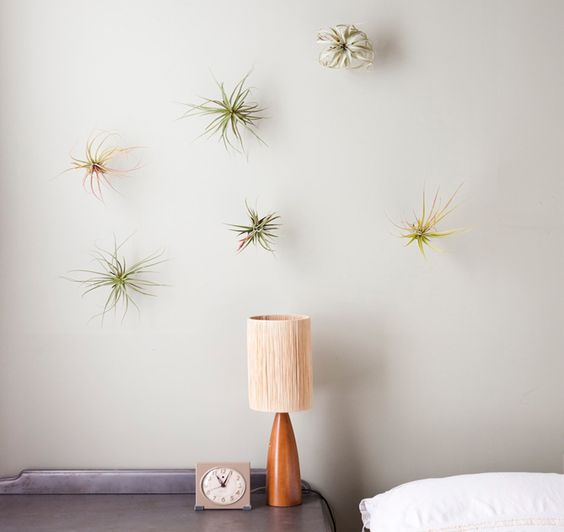 Air plants on the wall (mounted on cork, then attached to wall with a finishing nail?)