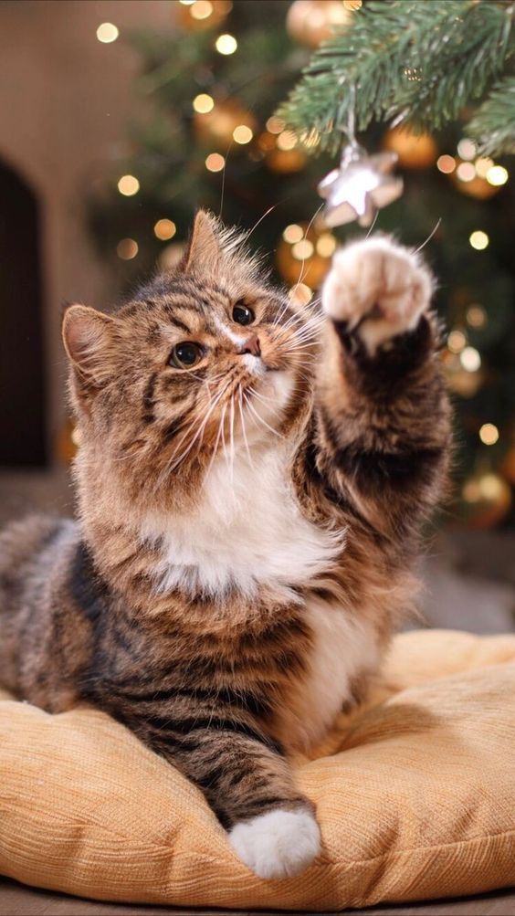 Christmas Wallpapers For Iphone Free To Download Miss M V Cute Cat Wallpaper Cat Background Cat Wallpaper