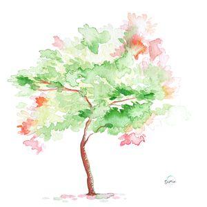 'Matcha Sakura Tree' by Susan Lin