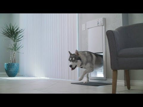 Superior Dog Doors At Great Sale Prices We Offer A Huge Pet Door Selection For Installation In Doors Walls And Sliding Glass Power Pet Doors Pets Dog Door
