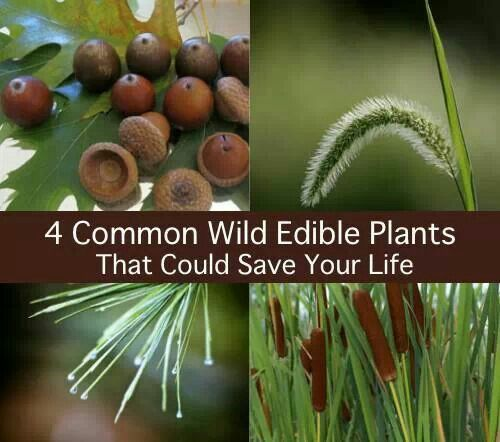 Wild eatable plants