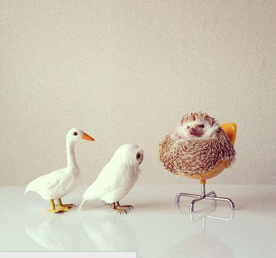 Hedgehog having a bad day, sitting in his royal hog chair <3
