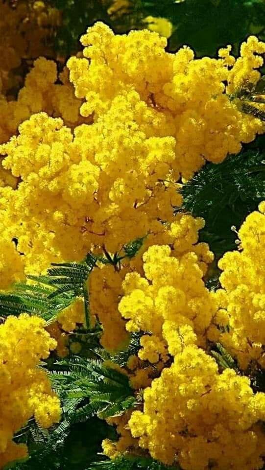 Arbusto Dai Fiori Gialli.70 Flowers With Meaning Fiori Selvatici Bellissimi Fiori E Fiori