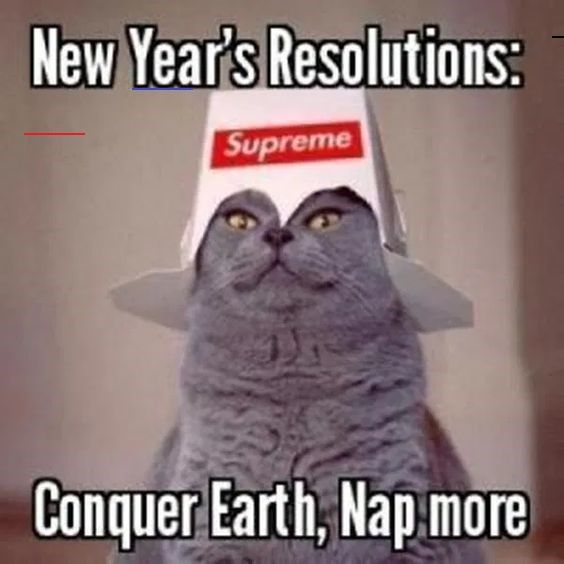 These Cats Are All Ready For 2020 New Year S Resolutions Memes Newyearsresolutions Funny New Years Memes New Years Resolution Funny Happy New Year Funny