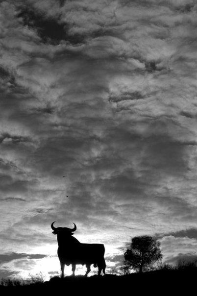 El toro indultado por los Españoles, Uno de los iconos de nuestra cultura