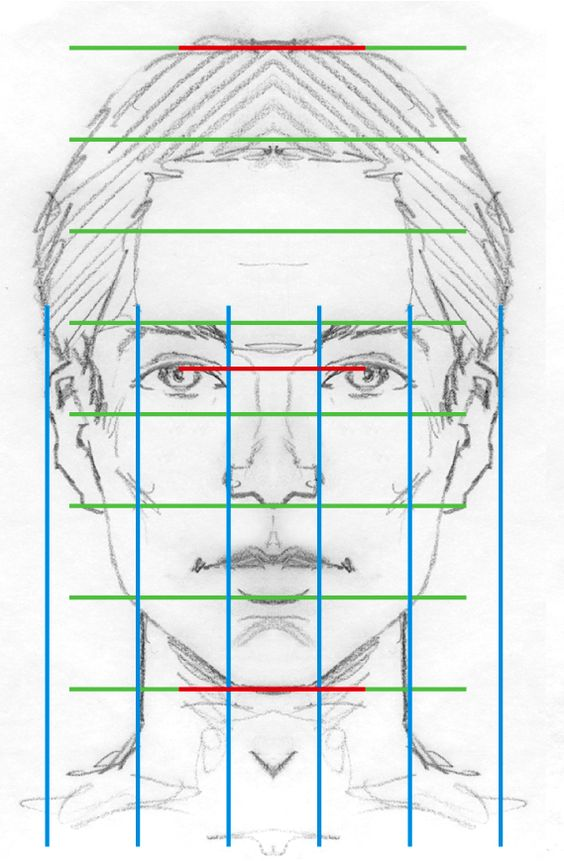 Character Design Proportions : Face proportions character design references キャラクター