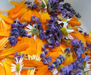 Natural face and skin cream made with lavender, chamomile, and calendula.