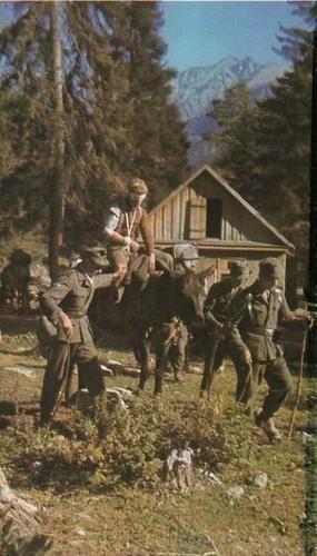 Un herido alemán de las tropas de montaña es llevado a la parte trasera de una mula por sus camaradas.