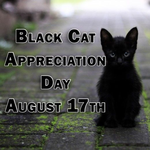History Of August 17 17 August Today Historical Events Black Cat Appreciation Day Black Cat Cat Online