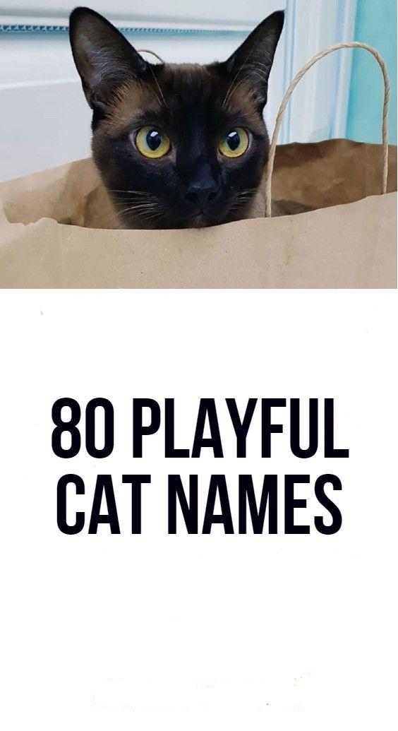 80 Playful Cat Names Cat Names Cats Names