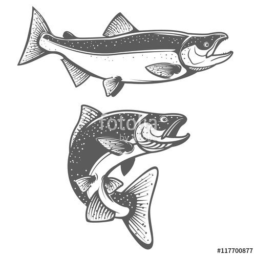 download the royalty free vector salmon silhouettes fresh seafood salmon fishing designed by kotliar ivan at the salmon drawing fish drawings fish graphic fresh seafood salmon fishing