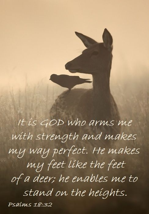 PSALM 18:32 ~ God makes my feet like the feet of a deer; he enables me to stand on the heights: