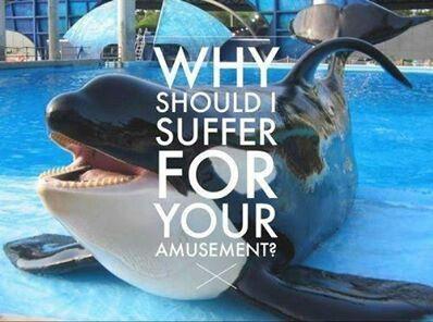 Seaworld captivity and animal abuse.