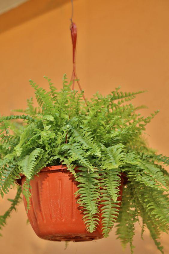Agrega macetas colgantes y crea un ambiente nuevo a tu for Crea tu jardin