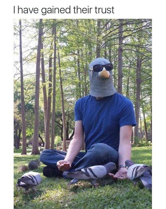 Tastefully Offensive on Tumblr, (via theblessedone) pigeon
