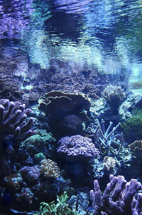 O fundo do mar é tão misterioso...