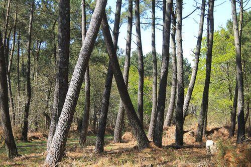 Tout savoir sur le prix des forêts et le volume des ventes. Le point sur les avantages fiscaux dédiés à l'investissement forestier. - Lire la suite sur www.pap.fr >>>