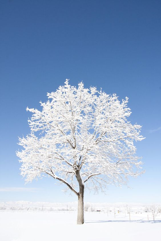 the amazing snow tree