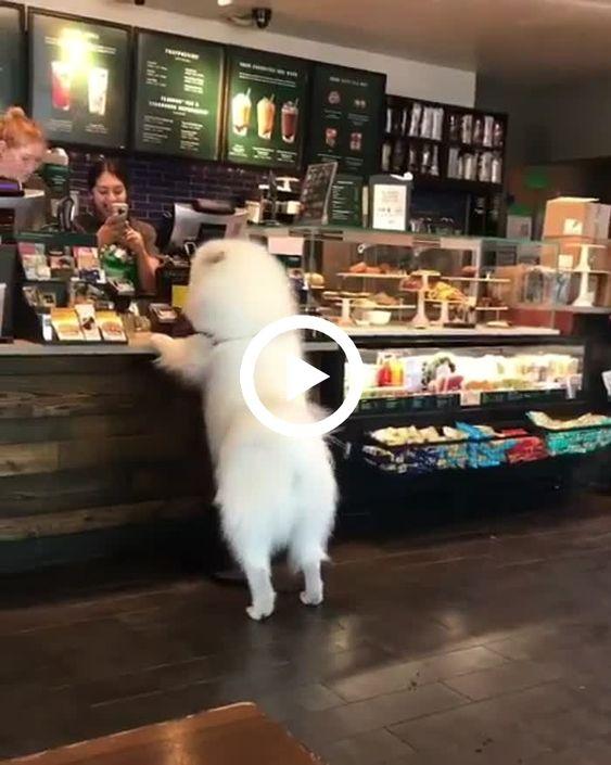 o cachorrinho fica esperando sua comida