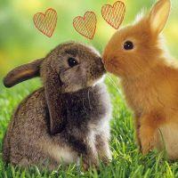 Valentijnsdag 2014: 9 romantische uitjes om je Valentijn mee te verrassen