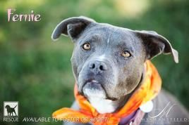 Fern - FOSTER or ADOPTER!