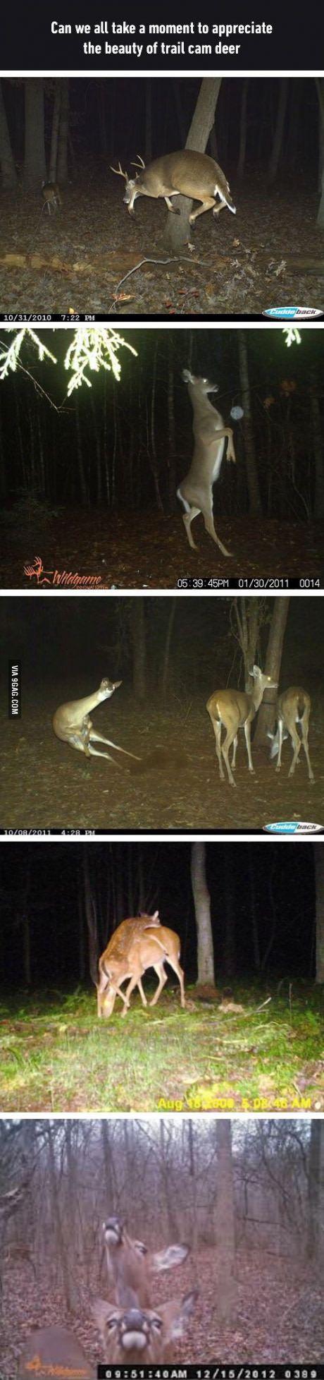 Deer are weird