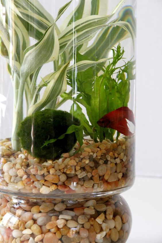 Learn how to create an indoor water garden featuring aquatic plantings complete with betta fish from HGTV Gardens.