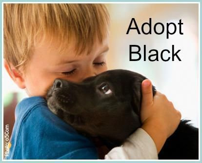"Black dogs, wait longer for adoption & are adopted less frequently. A higher percentage of perfectly healthy, adoptable dogs die in shelters because they are black. It's known as black dog syndrome. People associate light with good/safe and dark with bad/scary. Black dogs do not photograph well, & in shelters seem to ""disappear to the eye"" as potential adopters walk through. Even puppies can take longer and adult black dogs, especially larger ones, take the longest. It's very sad!:"