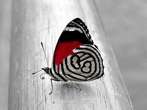 Love the splash of red on the black & white canvas.