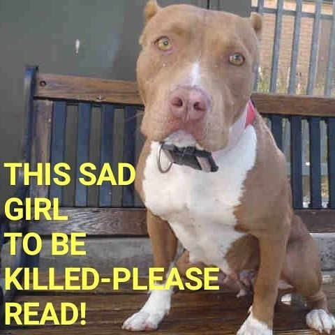 7 13 19 Princess To Be Killed On Notice She Was Adopted About A Year And A Half Ago Only To Be Dumped Recently By Owner Sh Animals Adoption Dog Pounds