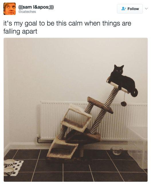 funny-cat-memes-17.png
