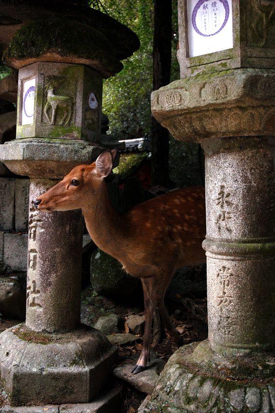Kasuga Grand Shrine - Nara, Japan