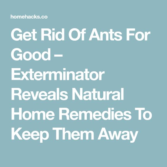 Get Rid Of Ants For Good – Exterminator Reveals Natural Home Remedies To Keep Them Away