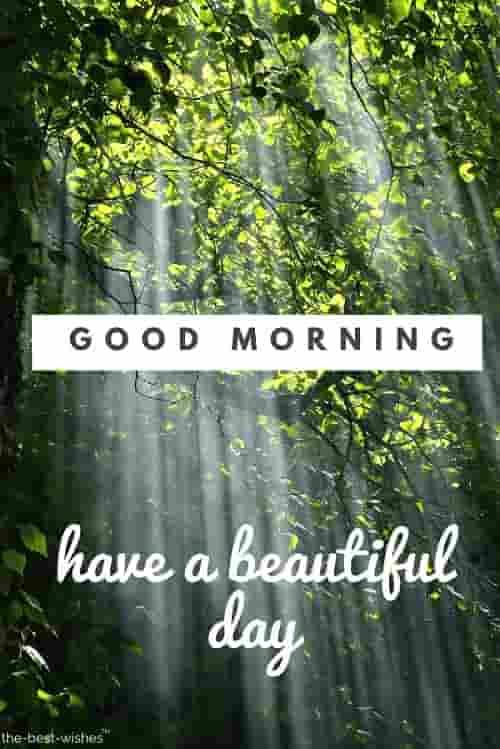 150 Fresh Beautiful Good Morning Images With Nature Good Morning Nature Good Morning Images Good Morning Beautiful
