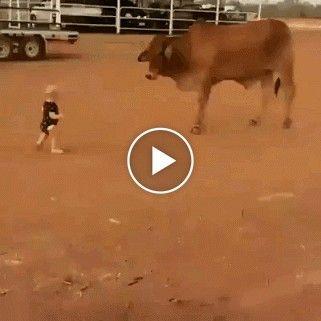 Bebe enfrenta toro não tem quem ajude o toro