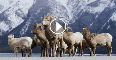 Alberta Canada - Banff Frozen in Time in 4K!