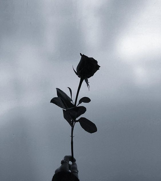 Profil Wa Bunga Aesthetic L Foto Bunga Aesthetic Di 2021 Gambar Bunga Gambar Bunga Wallpaper bunga hitam full hd