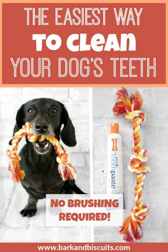 The Easiest Way To Clean Dog S Teeth No Brushing Required Dog Teeth Dog Care Dogs