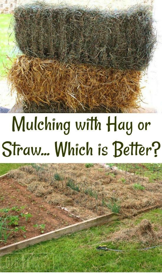 What Are Your Using To Mulch Your Garden Beds With This Summer Garden Mulch Mulch Landscaping Garden Beds