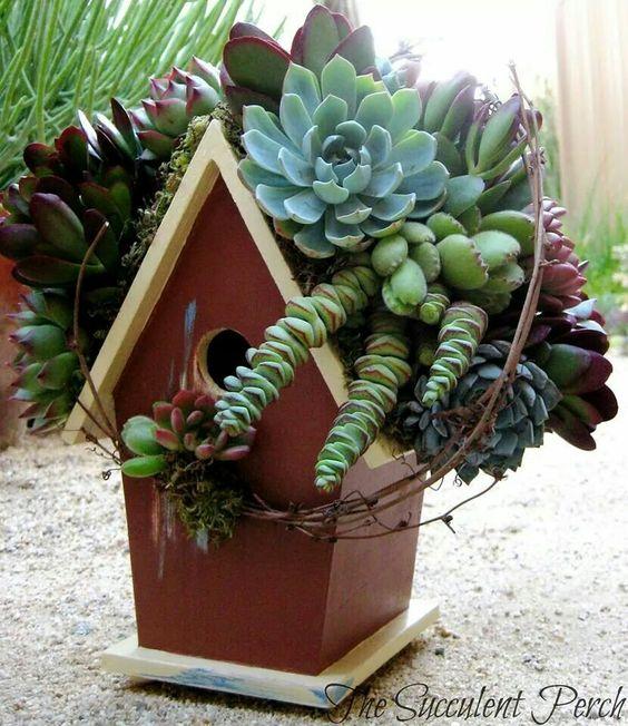 Sükulent kuş evi:)