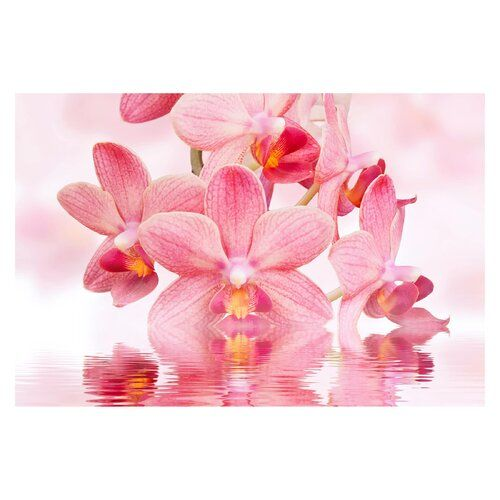Pink Orchids On Water 2 25m X 336cm Textured Matt Peel Stick